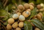 Hưng Yên: Thông tin nhãn 3.000 đồng/kg người trồng chán chẳng buồn bẻ là không chính xác
