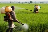 Vì sao thêm 4 hoạt chất bị loại khỏi danh mục thuốc bảo vệ thực vật tại Việt Nam?