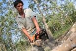 Giá cao su xuống thấp người dân phải chặt cây, bỏ vườn