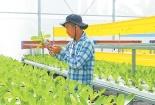 Để phát triển nông nghiếp, áp dụng công nghệ cao trong sản xuất là chưa đủ