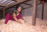 Hơn 200 tấn tỏi Lý Sơn tồn động dù giá giảm mạnh