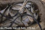 Ngư dân Bà Rịa - Vũng Tàu kiếm tiền triệu sau vài giờ đi biển