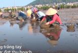 Thủy sản chết hàng loạt ở Nghệ An, người nuôi mất tiền tỷ