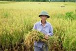 Nông dân đang hụt hơi trước Công nghiệp 4.0
