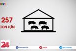 Dịch tả lợn Châu Phi xuất hiện tại Việt Nam