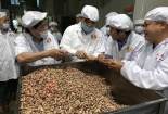 Các doanh nghiệp cần cẩn trọng khi nhập khẩu hạt điều về Việt Nam