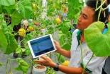 Cần thúc đẩy hơn nữa đổi mới sáng tạo trong doanh nghiệp nông nghiệp