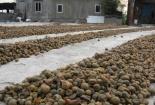 Ô mai siêu bẩn: Phơi nền đất, lấy chân dẫm
