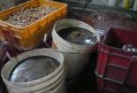 Đột kích cơ sở sản xuất socola siêu bẩn