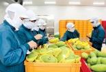 Rau quả Việt: Đa dạng thị trường với EVFTA, không đơn giản