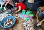 Đường đi của cá ươn, cá thối đến bàn ăn nhà hàng