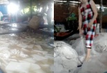 Hãi hùng đột nhập cơ sở sản xuất thạch dừa siêu bẩn