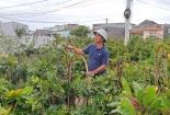 Thời tiết lạnh kéo dài, nhà vườn lo mai không nở kịp Tết