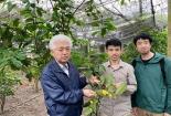 Nguyễn Đức Độ - chàng trai trẻ thổi hồn cho Trà hoa vàng Tam Đảo