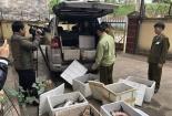 Phát hiện hàng loạt vụ nhập lậu cá tầm