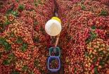 Bộ Công thương cam kết đồng hành cùng Bắc Giang tiêu thụ nông sản