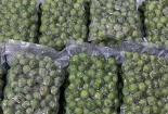 Lần đầu xuất khẩu quả sấu đông lạnh sang thị trường Úc