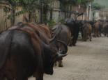 Những nghề kiếm tiền tỷ khó tin giữa lòng Hà Nội, Sài Gòn