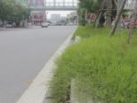 Cỏ dại mọc um tùm sau khi Hà Nội ngừng chi tiền tỷ để cắt cỏ, tỉa cây