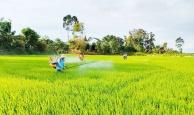 Hà Nội nỗ lực khôi phục sản xuất ở 'vùng xanh'