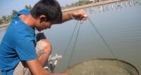 http://vietq.vn/nhap-khau-khang-sinh-thu-y-dung-sai-muc-dich-se-bi-tram-d103581.html