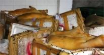 http://vietq.vn/tin-canh-bao-noi-bat-nhat-ngay-269phat-hien-5000-kg-mam-ca-tra-co-doi-d103850.html