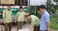 http://vietq.vn/bat-giu-xe-container-cho-5-tan-nam-lon-thoi-dang-tren-duong-vao-nam-tieu-thu-d142573.html