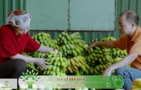 2.000 tấn chuối sấy dẻo Sơn La đưa ra thị trường mỗi năm