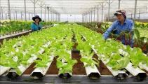Nông nghiệp hữu cơ- Xu hướng tất yếu nâng cao chất lượng nông sản