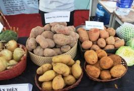 Cảnh báo nông sản Trung Quốc đội lốt nông sản Việt tràn lan các khu chợ