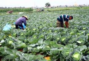 Giải cứu nông sản bằng công nghệ số