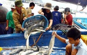 Thu mua toàn bộ hải sản của người dân miền Trung sau vụ cá chết