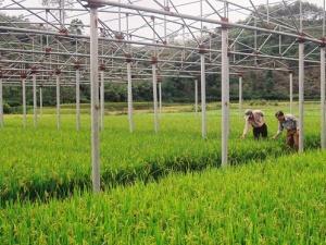 Phát triển nông nghiệp nhờ ứng dụng công nghệ cao