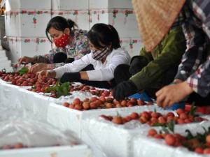 Giải bài toán ứng dụng công nghệ bảo quản và chế biến nông sản sạch