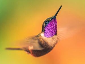 Cận cảnh 'nữ hoàng' của các loài chim