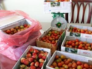 Hô biến cà chua thành dâu tây để lừa du khách