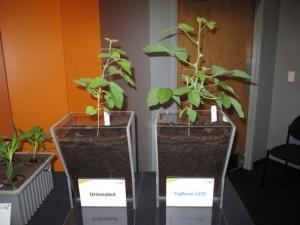 Ứng dụng mới tăng năng suất chất lượng nông nghiệp