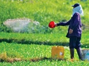 Nông dân Việt Nam đã hết thật thà?