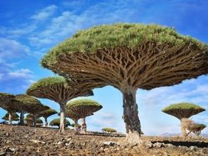 Những loài thực vật kỳ lạ của tự nhiên