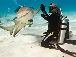 Sự thật về cá mập biết xấu hổ như con người?
