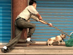 Nên phạt tù chung thân người trộm chó?