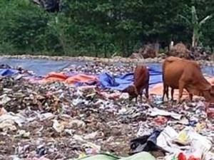 Dân hoảng hồn vì doanh nghiệp đổ rác thải nguy hại vào bãi rác sinh hoạt