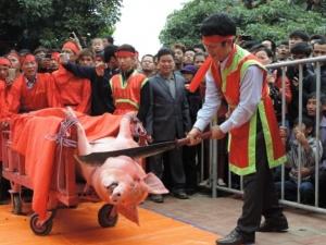 Tổ chức Động vật Châu Á phản đối Lễ hội Chém lợn ở Việt Nam