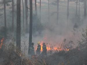 Quảng Ninh: Người dân dọn rừng 'nướng' 6 hecta keo trong biển lửa