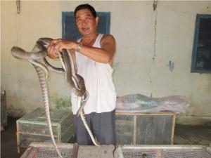 Trung Quốc đột ngột ngừng mua rắn, nông dân 'khóc ròng'