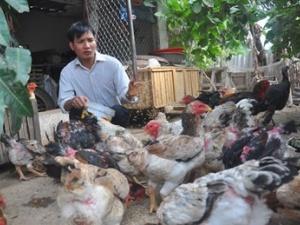 Cháy hàng giống gà 'triệu phú' phục vụ đại gia ăn Tết