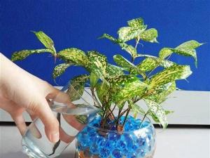 Kỹ thuật trồng cây cảnh thủy canh dễ dàng