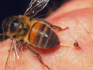 Long An: Người dân phải trốn trong nhà vì bầy ong mật sát thủ