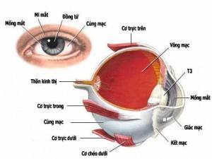 Nghiên cứu công nghệ điều trị tổn thương nhãn cầu mắt đạt giải Kovalevskaia
