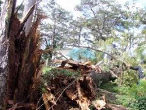 Đắk Nông: Cây đổ đè chết thượng sĩ công an trên đường đi công tác